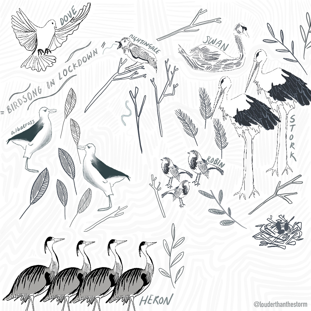 A black and white line drawing with many types of birds surrounded by leaves and trees