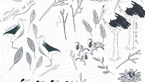 Birdsong in Lockdown: It is our silent spring, not theirs