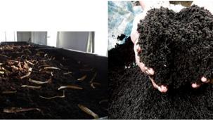 Solucan gübresi nasıl üretilir ?