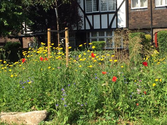 Wildflowers pic.jpg