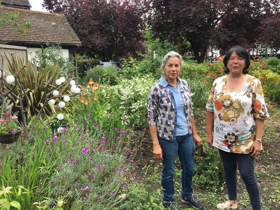 Volunteer gardening