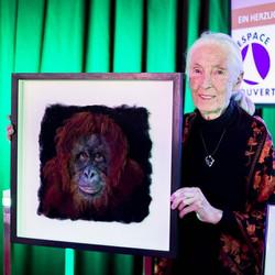 'Hope' Orangutan portrait