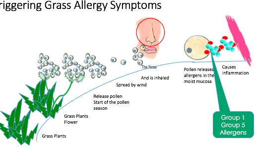 Spring is approaching and your allergies may be flaring up- we can help.