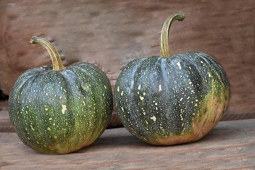 Pumpkin - Ensujju