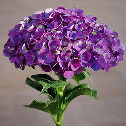 Purple Hydrangea_edited.jpg
