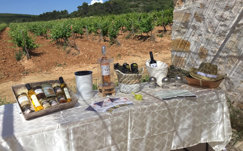 Découverte d'un vignoble provençal