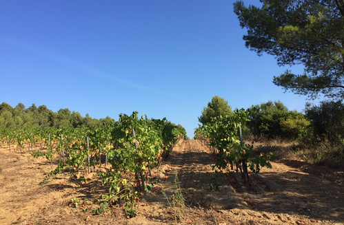 Visite dans la vallée du Rhône