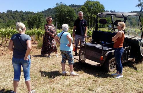 A la découverte des vignerons du Haut Var- visite des vignes en buggy