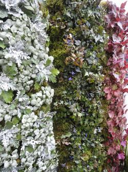 おしゃれな壁面緑化 久留米市