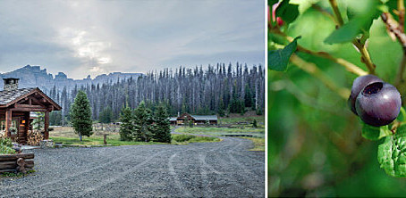 "New ""Huckleberry Season"" at Brooks Lake Lodge & Spa Offers Late Summer Yum"