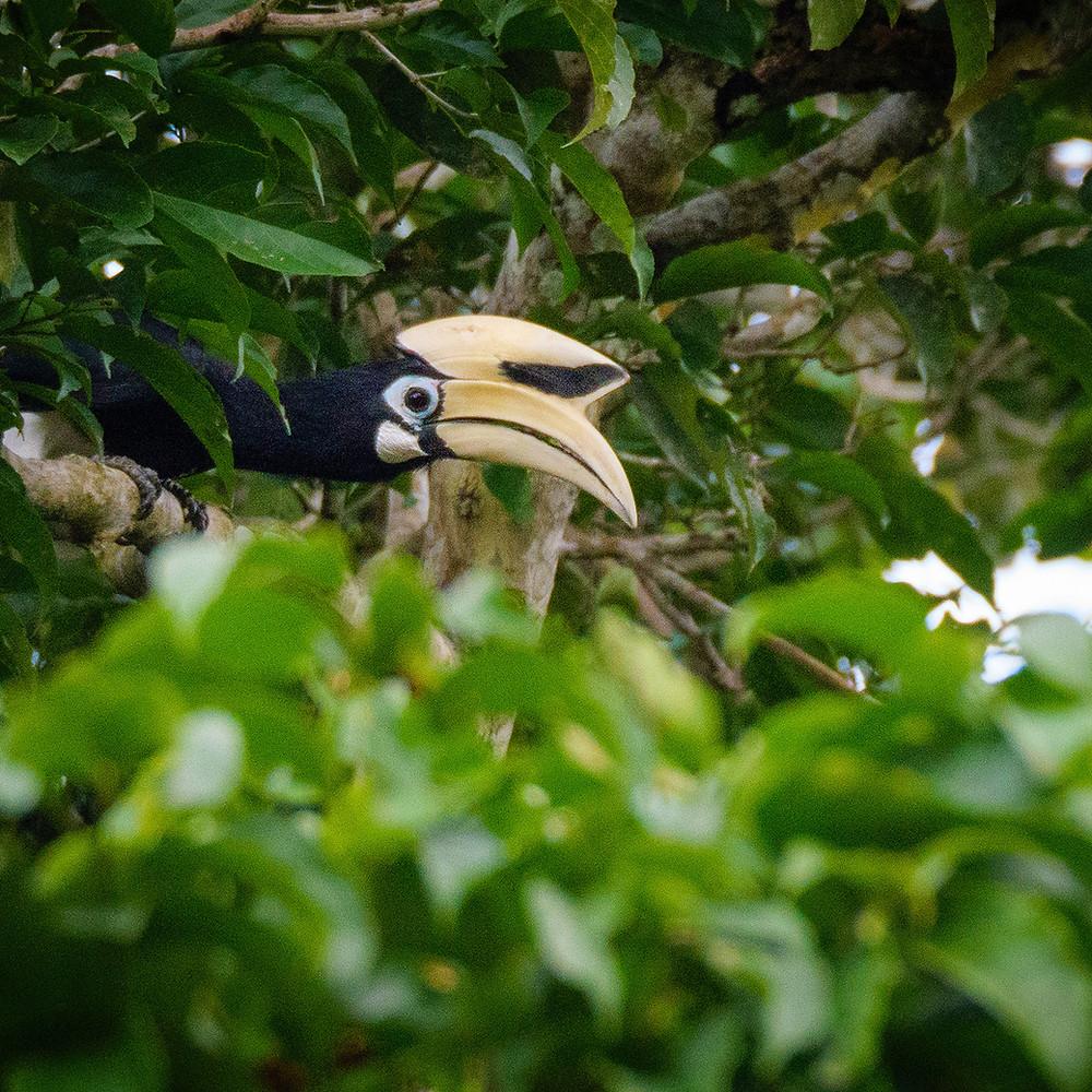 Ptica z velikim rumenim kljunom med zelenjem