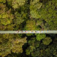 Monteverde Hanging Bridge