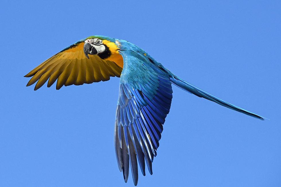 parrot-2796766_1920.jpg