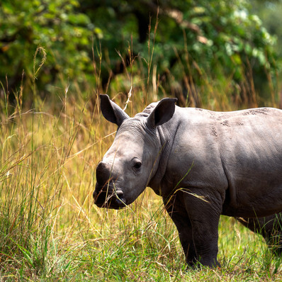 onehorned-rhino.jpg