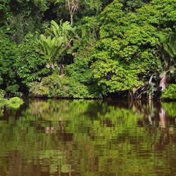 kostarika-tortuguero.jpg