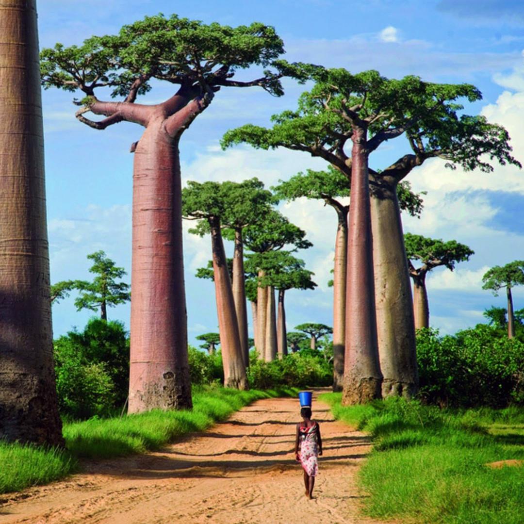 baobab-avenue.jpg
