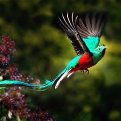 kostarika-resplendent-quetzal.jpeg