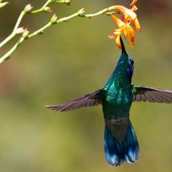 kostarika-kolibri.jpg