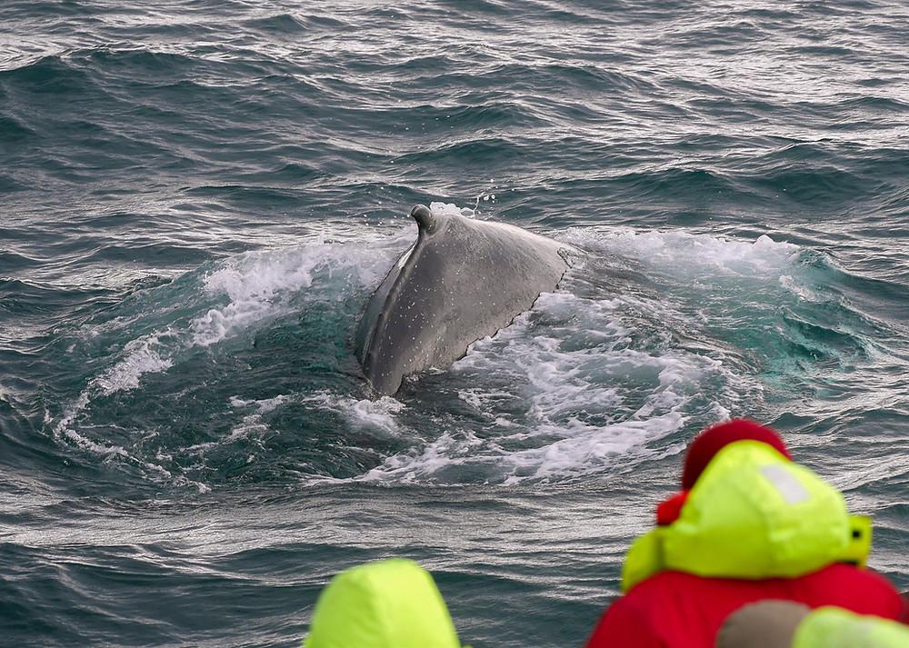 Ljudje z ladje opazujejo kita v morju