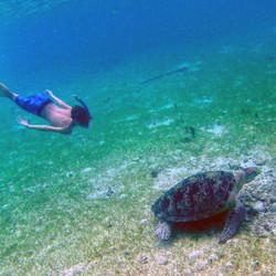 jakob-turtle-derawan.jpg