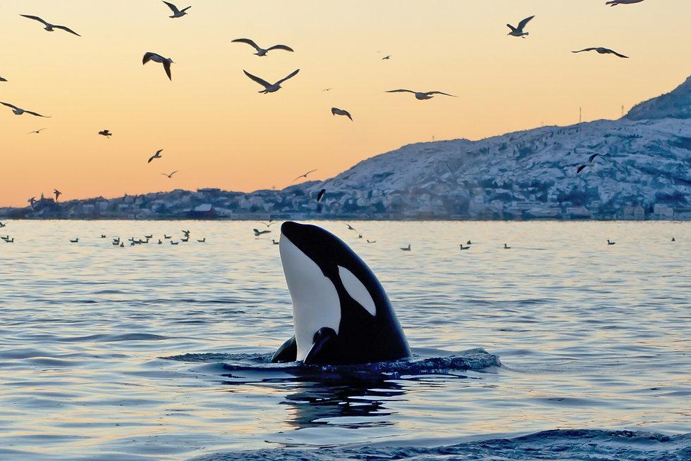 killer-whale.jpg