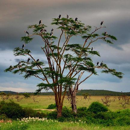 maribu-storks-.jpg