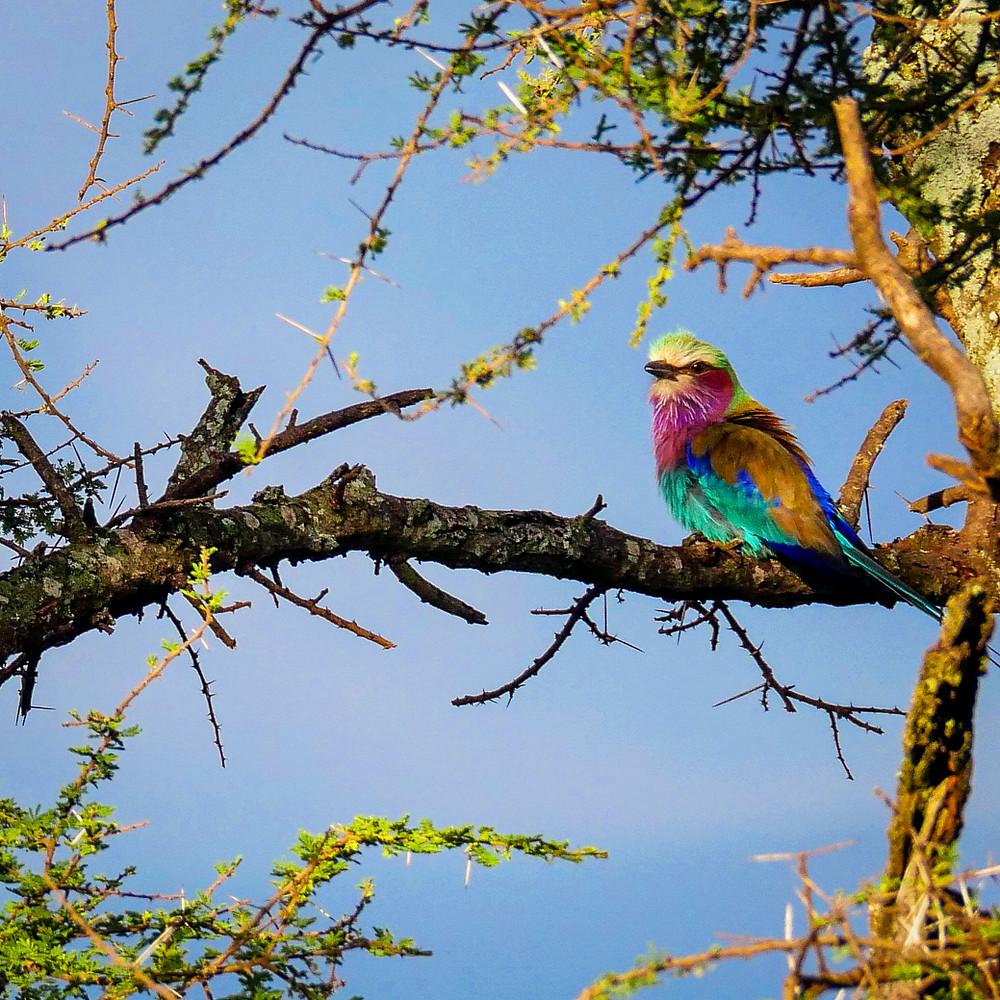 večbarvna ptica na veji z modrim nebom v ozadju