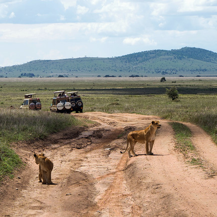 lions-serengeti-2.jpg