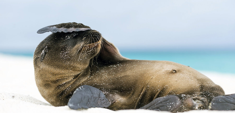 sea-lion-galapagos-beach.jpg