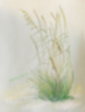 Kentucky landscape artist Elsie Harris' Sea Oat drawing