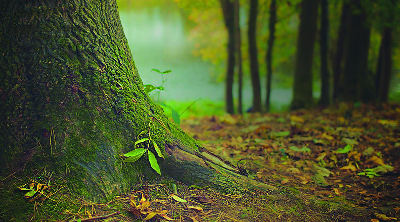 call-of-the-forest-plant-a-tree1.jpg