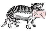 mail cat.jpg