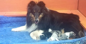 Clinique with Lars puppies.jpb