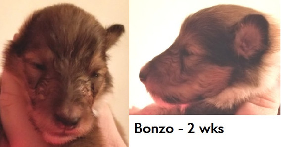 Bonzo_wk2.jpg
