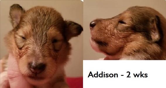 Addison_wk2.jpg