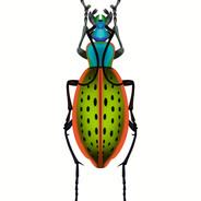 Green Dot Beetle