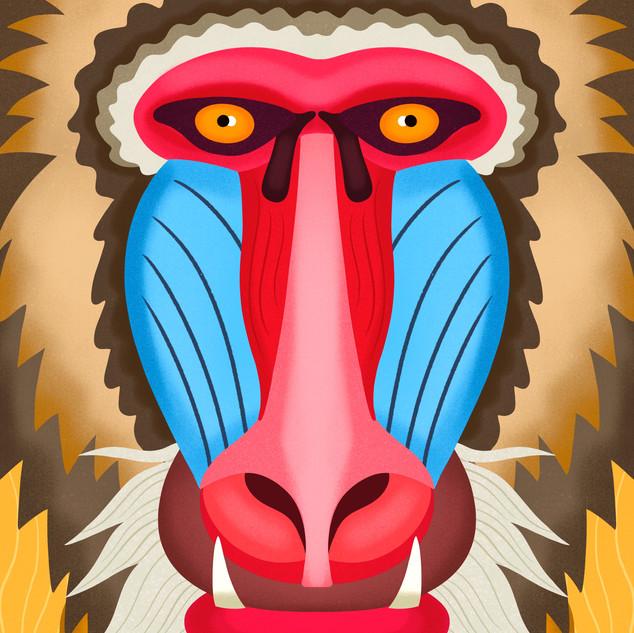 Baboon Face