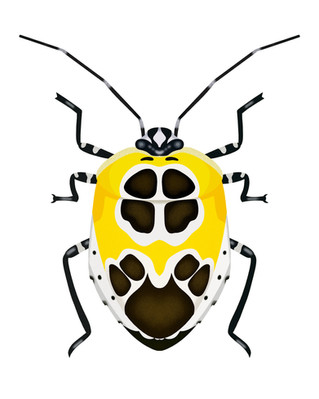Yellow and Black and White Beetle