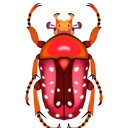 Orange and Red Beetle