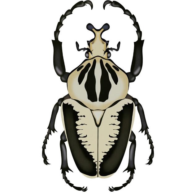 Goliath Beetle.jpg