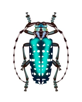 Blue Dot Beetle