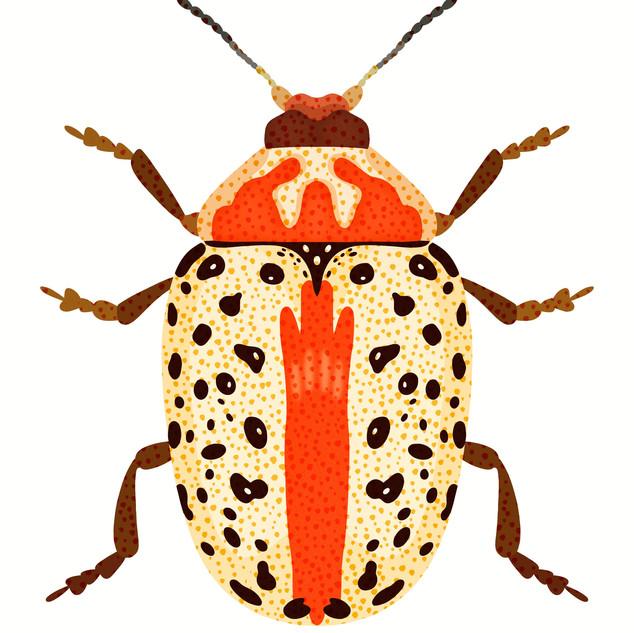 White and Orange Beetle