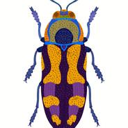 Purple and Blue Beetle.jpg
