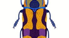 Blue and Purple Beetle