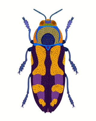 Blue and Purple Beetle