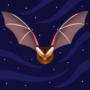 Barbastelle Bat for Scouts