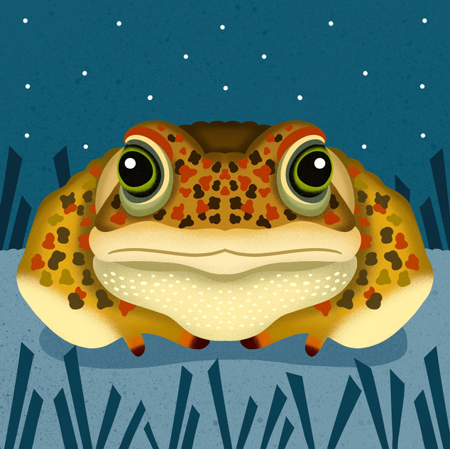 Natterjack Toad for Scouts