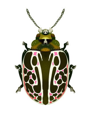 Green, White, and Pink Beetle