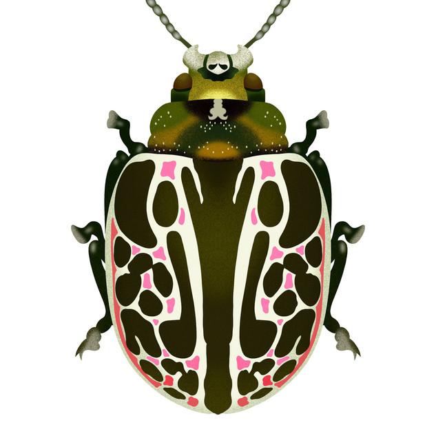 Green,White,Pink Beetle