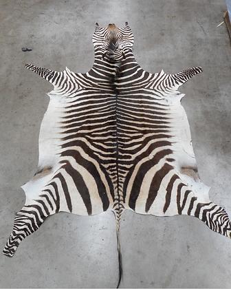 Zebra Rug - 2nd Grade